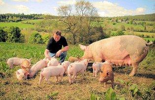 Lavorare in fattoria in irlanda con wwoof italiani for Aprire piani di fattoria