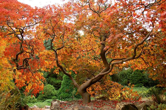 visitare Dublino in autunno